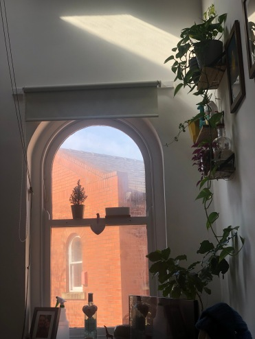 View of plants and window